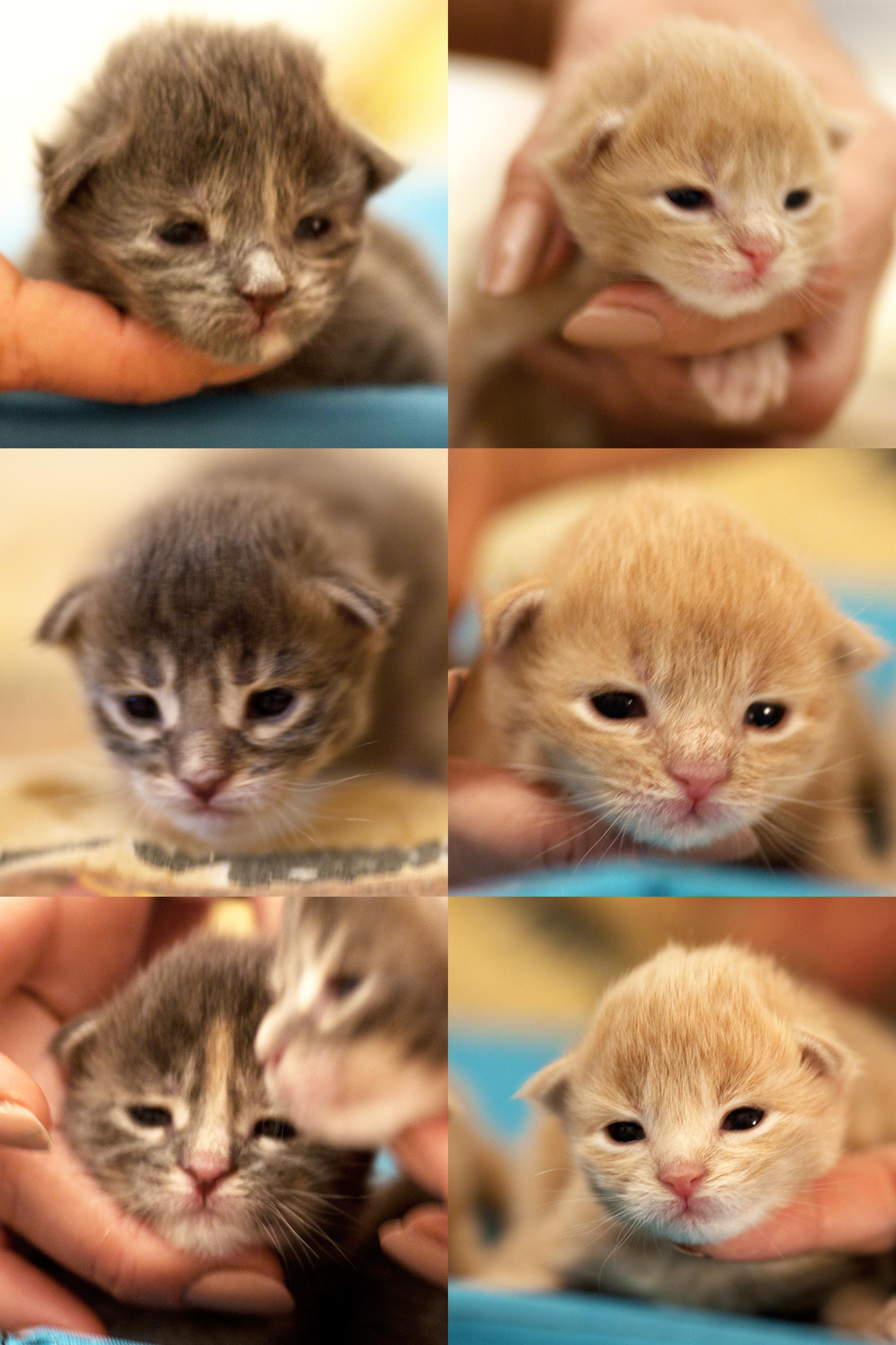 котята (1)