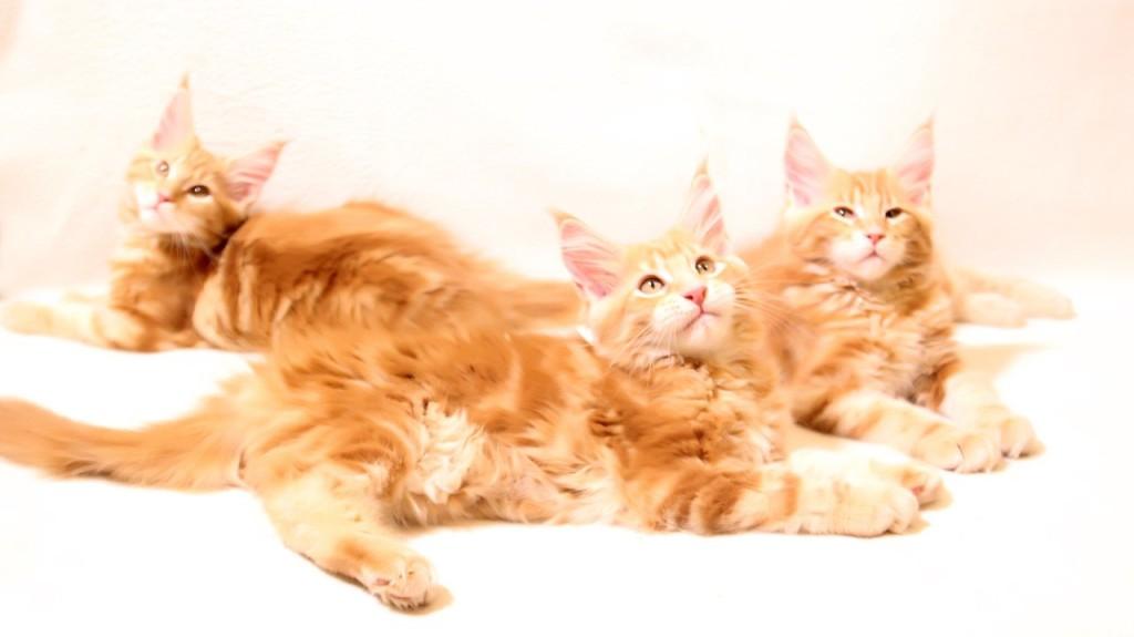 Shcats3