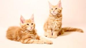 Shcats4